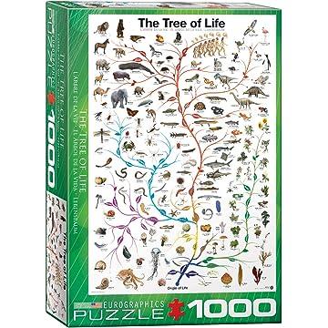 Eurographics Evolution The Tree of Life