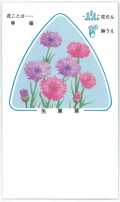 販促景品用(ノベルティー)絵袋詰種子『矢車草』500袋セット(秋播き) B01KX53PXK