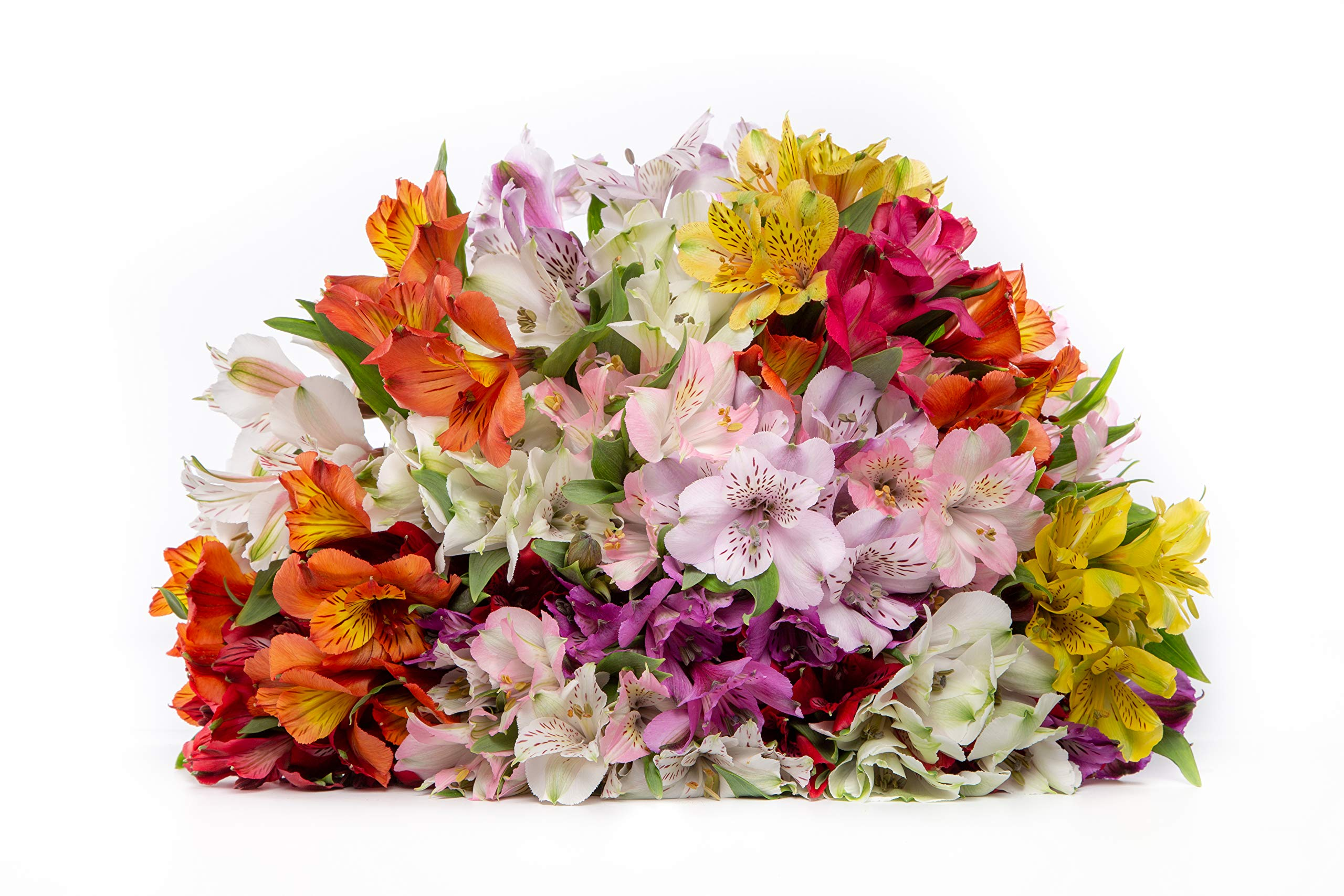 Rainbow Fields Multicolored Alstroemeria Bouquet Full Flowers Sustainably Grown and Harvested, No Vase Included