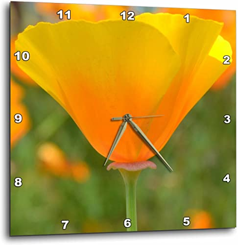 3dRose dpp_29504_1 California Poppy Orange Flower Floral Photography Nature-Wall Clock, 10 by 10-Inch