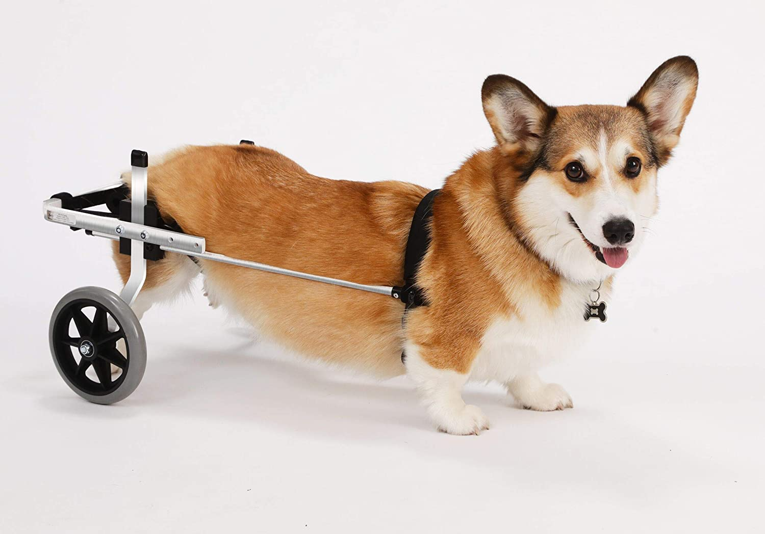 Amazon.com : K9 Carts Dog Wheelchair ...
