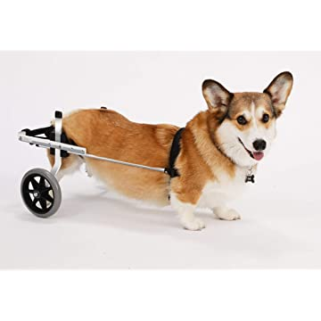 K9 Carts Rear Support