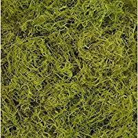 Shinoda Design Center 1 lb Bag Preserved & Dyed Chartreuse Spanish Moss