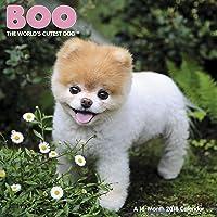 Boo 2016 Calendar: The World's Cutest Dog