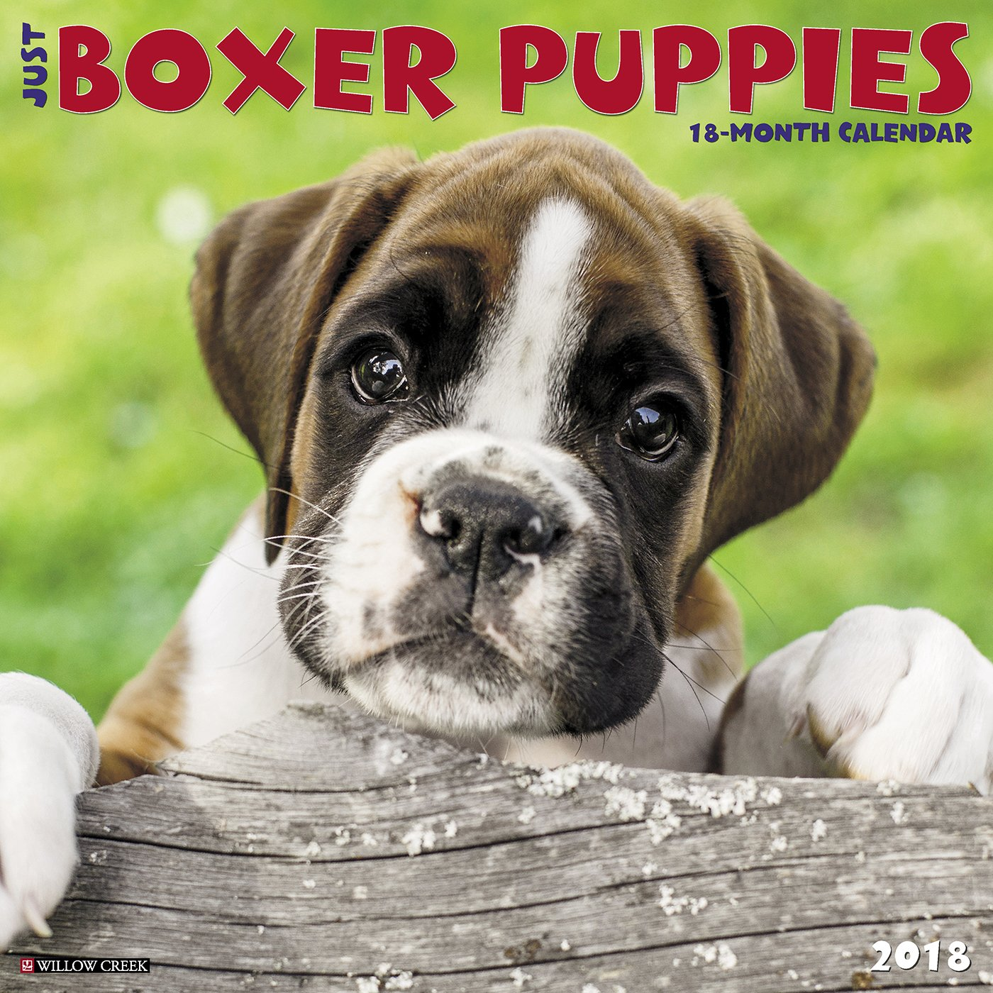Just Boxer Puppies 2018 Calendar Willow Creek Press 9781682344248