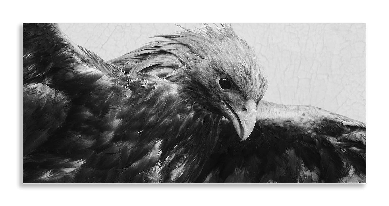 Bird of prey art black white animal kingdom canvas wall art