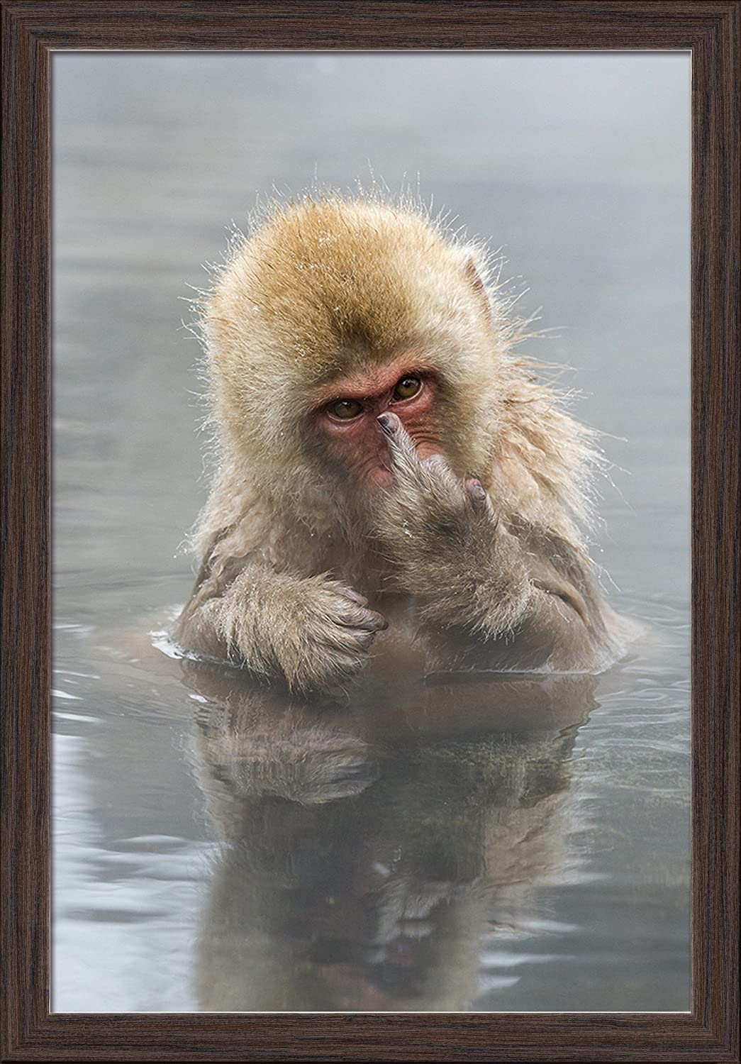 24x36 Giclee Art Print, Gallery Framed, White Wood Japanese Macaque Monkey Showing Middle Finger