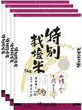 白米 信州産 特別栽培米 ミルキークイーン 20kg(5kg×4) 令和元年産