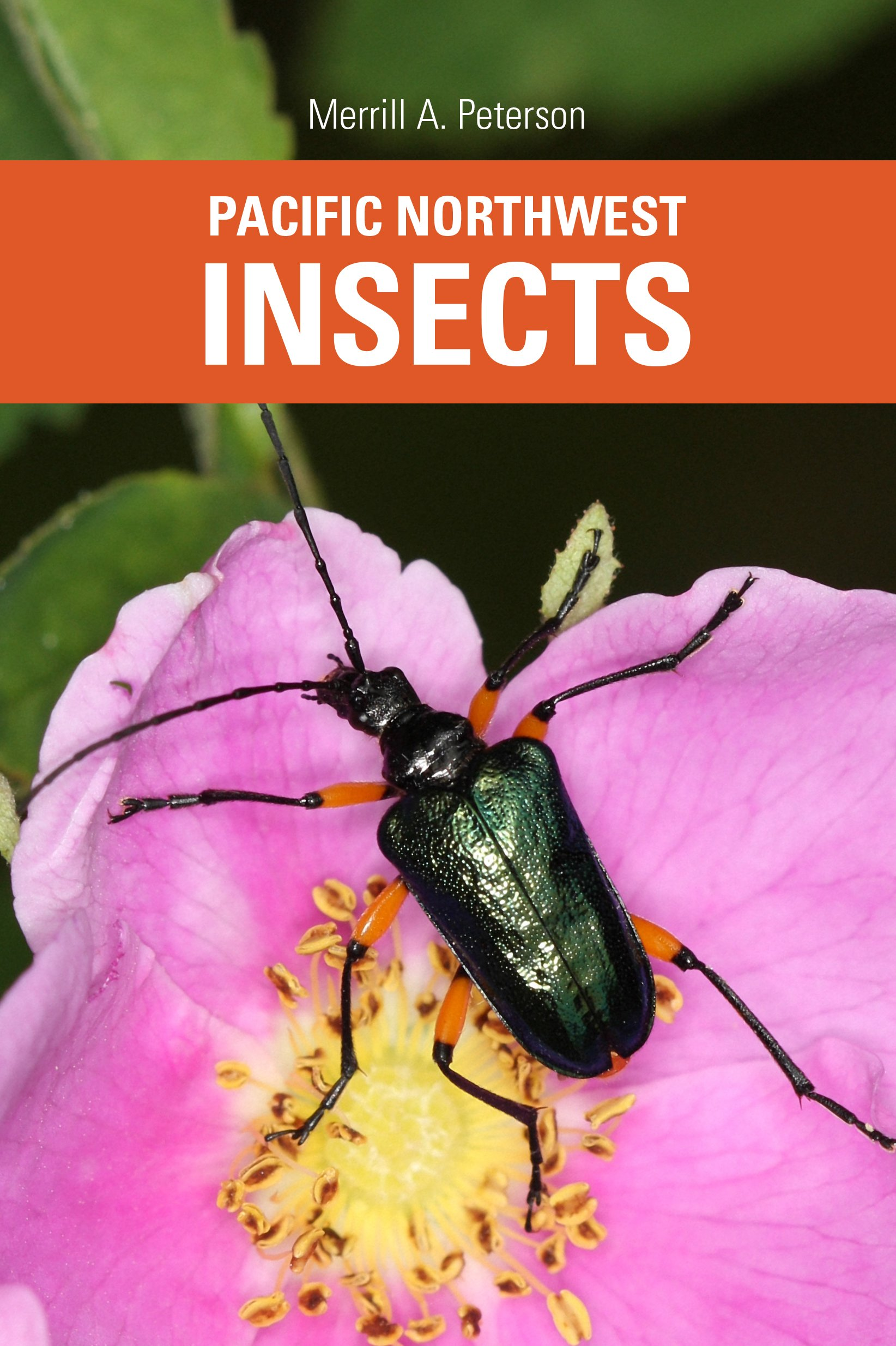 Pacific Northwest Insects: Merrill A  Peterson: 9780914516187