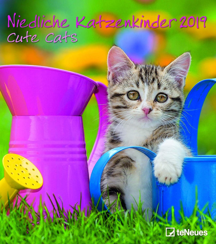 Calendario Pared 2019 gatito – gato Mignon – gatitos – Felin – formato 30 x 34 cm espiral (TN) + incluye un – Agenda de bolsillo 2019: Amazon.es: Oficina y papelería