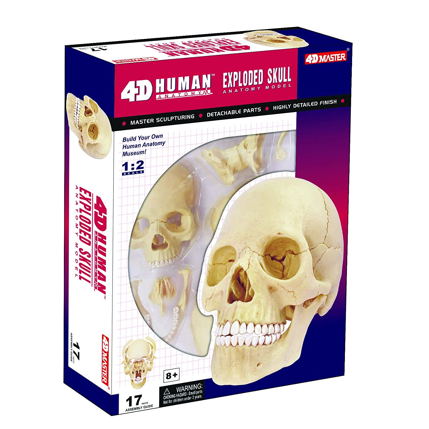 Amazon.com: Exploded Skull Anatomy Model - Build your Own!: Toys & Games