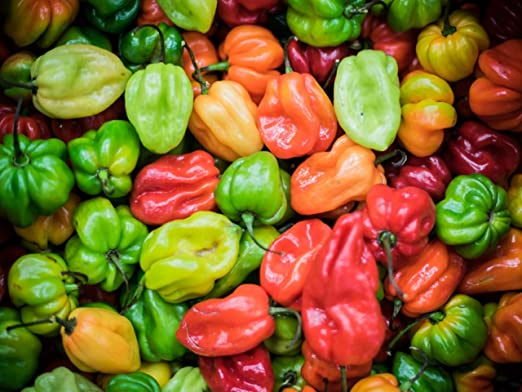 25 graines de qualité-jaune bhut jolokia//naga jolokia ghost chilli