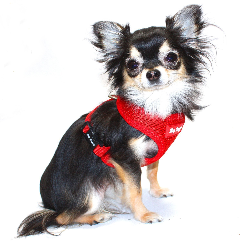81Elf5xgYML._SL1500_ amazon com hip doggie ultra comfort orange mesh harness vest