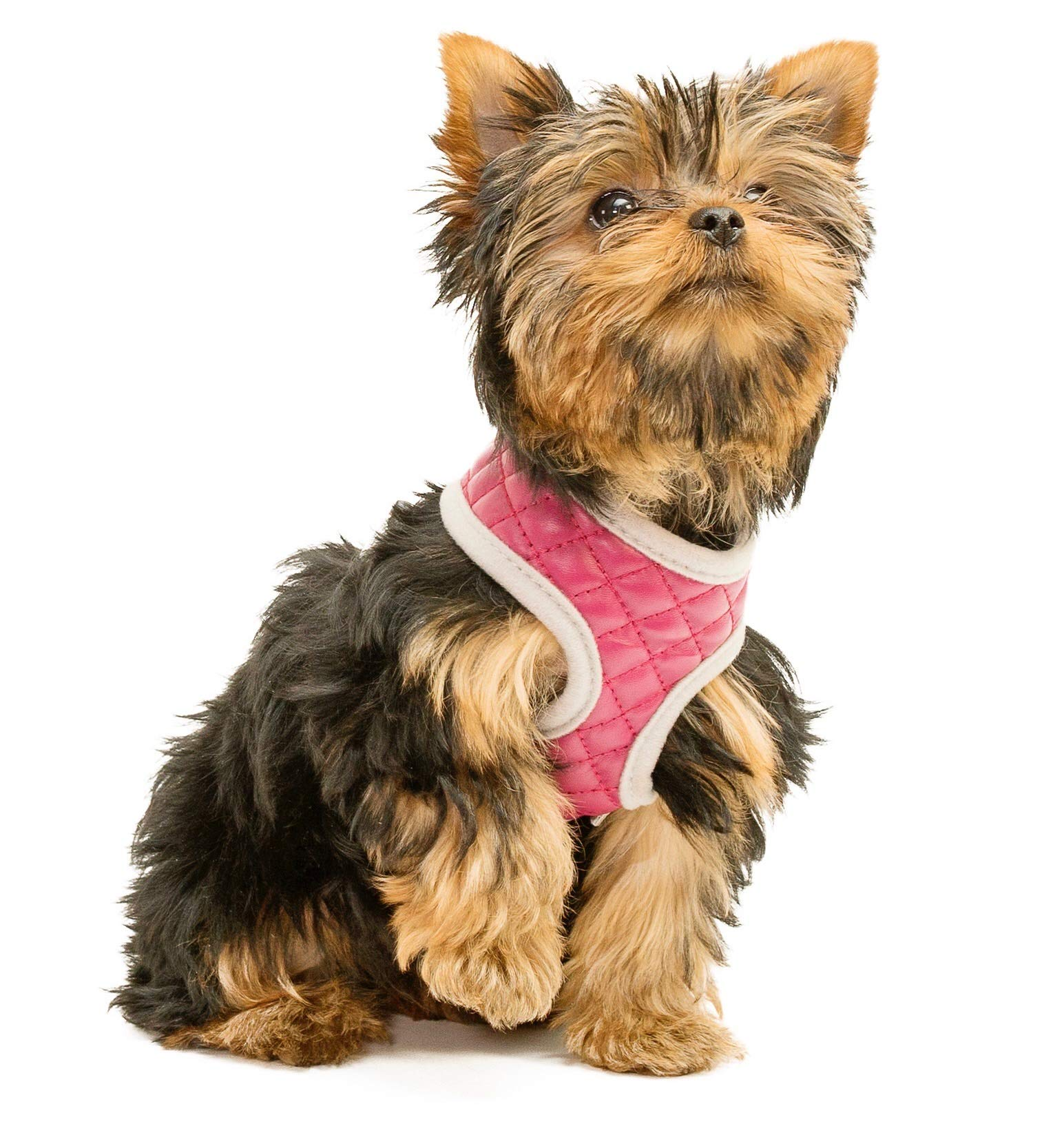 ZuGoPet Quilted Harness (Small 12''-17'', Pink) by ZuGoPet (Image #4)