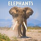 Elephants Calendar 2018