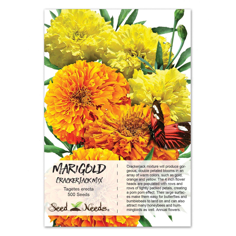 Amazon Package Of 500 Seeds African Marigold Crackerjack