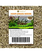 """0.35 oz. Hair Grass Seeds - Mid or Foreground Tank Decor - Amphibious Carpet Aquarium Plant - Can Grow Fast Up to 4"""" - Short Germination Time - Creeper Plant Covers Tank Surface Quickly"""