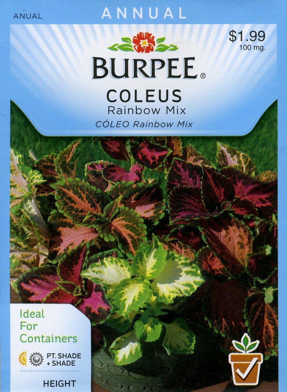 ES 69 COLEUS Rainbow Improved Mix Seeds