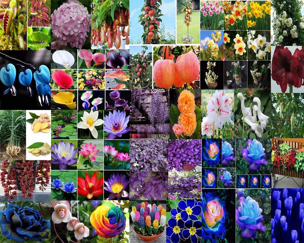 Portal Cool Paquete de se as: Tipo 1: Huerta jardín de Se ...