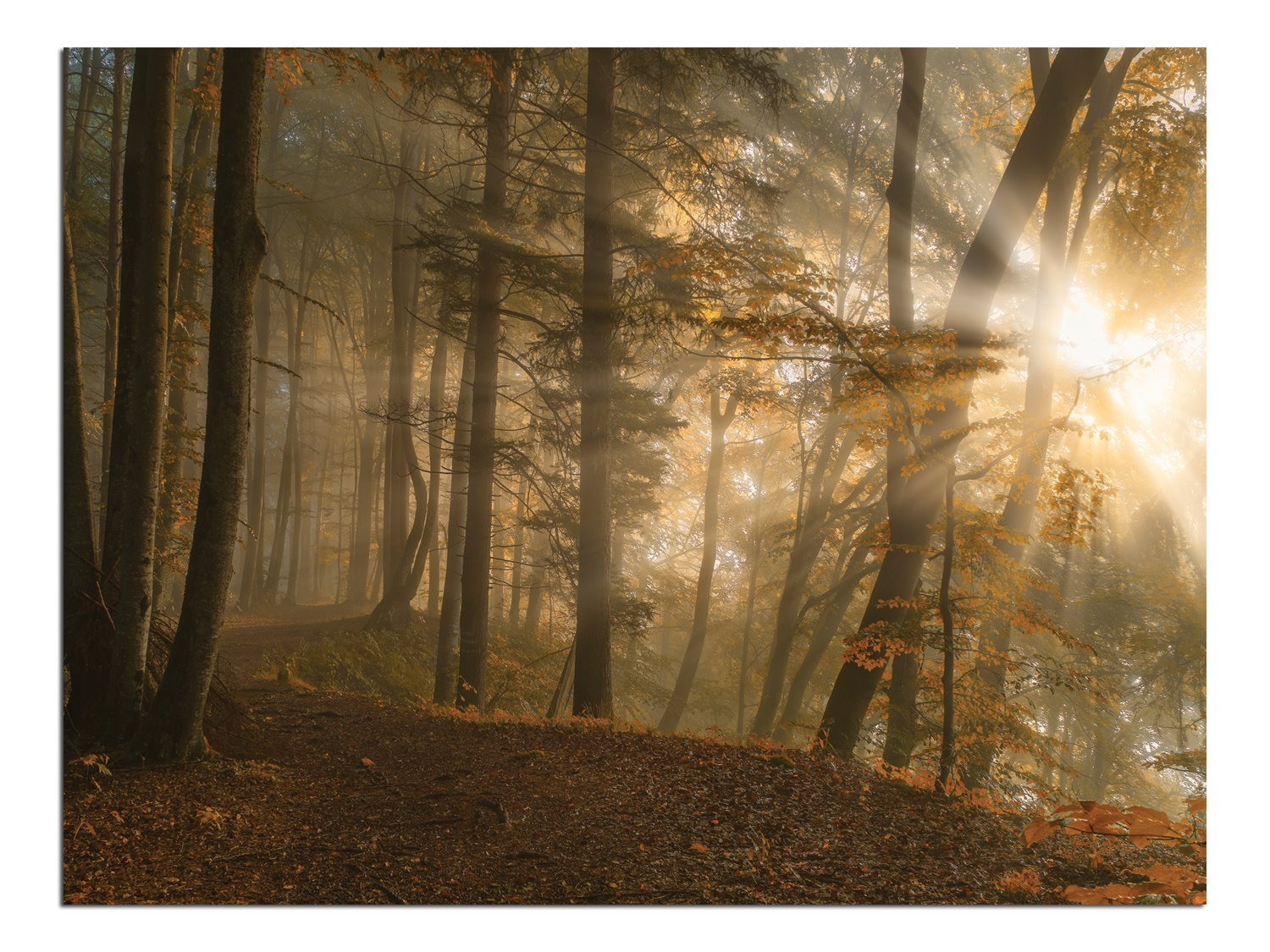 JP London Solvent Free Print PAPXS1X751183 Forest Light Morning Mist Autumn Leaves Ready to Frame Poster Wall Art 8 by 10