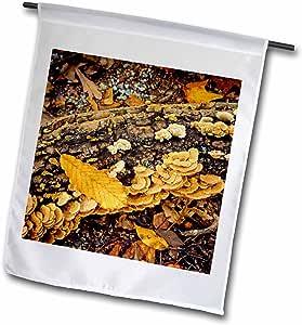 Boehm Photography Fall - Autumn Log - 18 x 27 inch Garden Flag (fl_77218_2)