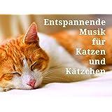 Entspannende Musik für Katzen und Kätzchen