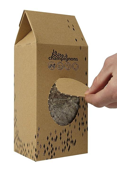 La Boîte à Champignons Lista para cultivar - (clásica para 2 ...