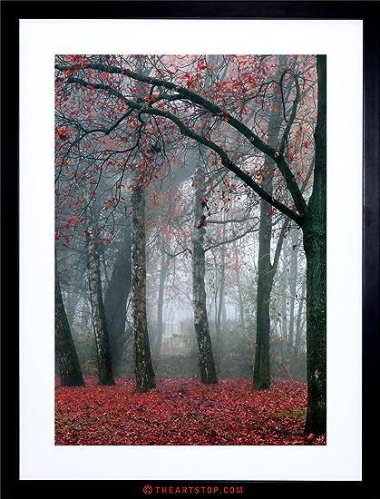 Amazon.com: PHOTO NATURE FOREST TREE AUTUMN FALL BEAUTIFUL RED ...