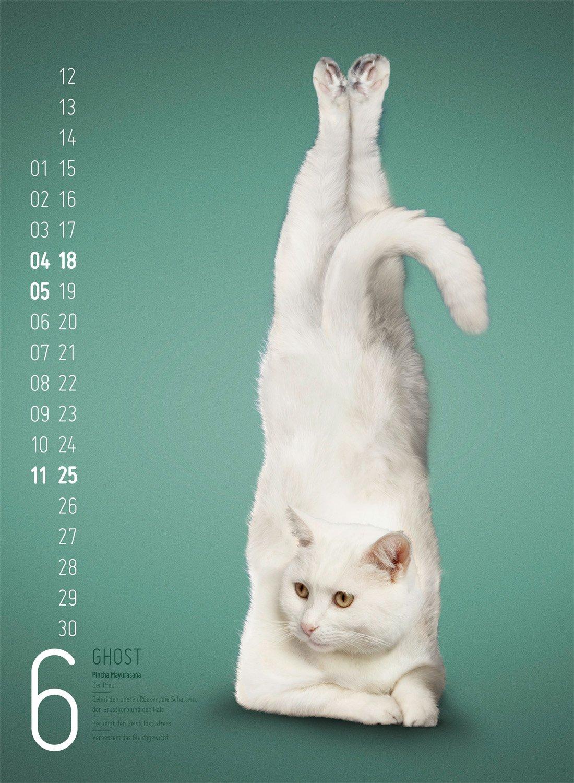 Yoga Cats 2017: Amazon.es: Daniel Borris: Libros en idiomas ...