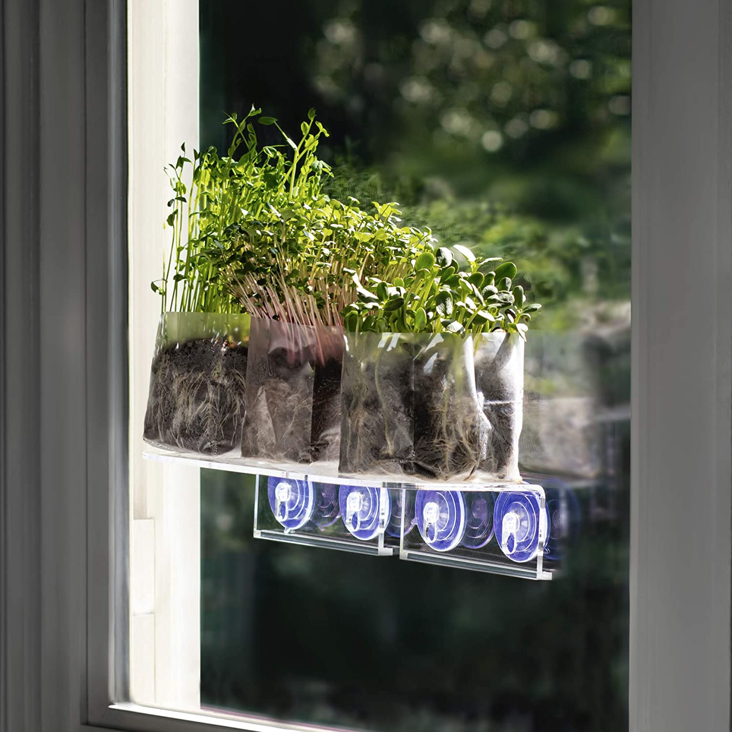 Window Garden Double Veg Ledge Shelf Pop Up Microgreens Kit Bundle - Grow Superfood on Your Indoor Window. 3 Varieties (Sunflower, Radish and Pea Shoots) Easy to Sprout, Out of Your Way, in The Sun.
