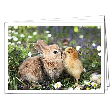 Tysk Design Postkarten Lustige Tiere 10 Postkarten Hase Und Kuken