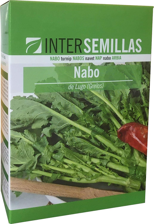 Semillas Nabo Globo Blanco de Lugo (Grelos de Lugo) Paquete 250 g ...