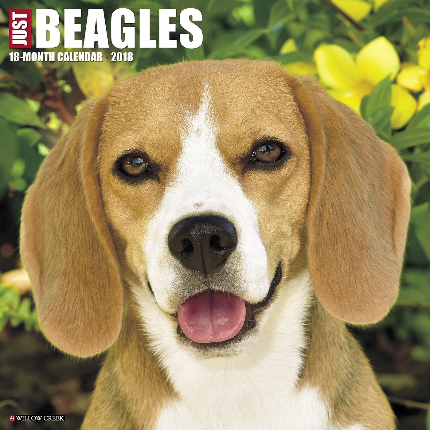 Good Wisconsin Beagle Adorable Dog - 81F-e5sIklL  Image_911612  .jpg