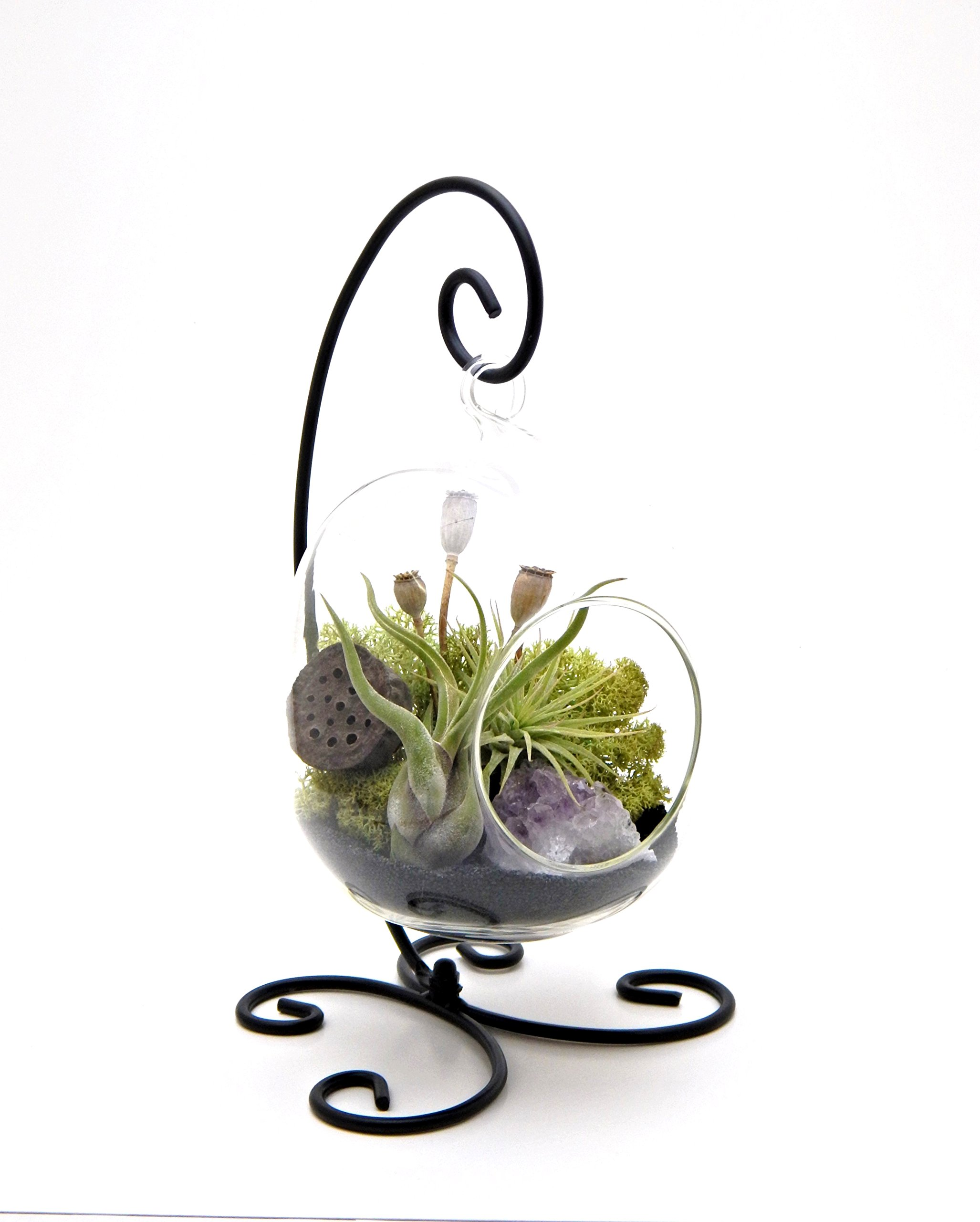 Bliss Gardens Air Plant Terrarium Kit with Amethyst / 6'' Oval Glass With Black Stand/Tillandsia Gift/Midnight Forest by Bliss Gardens