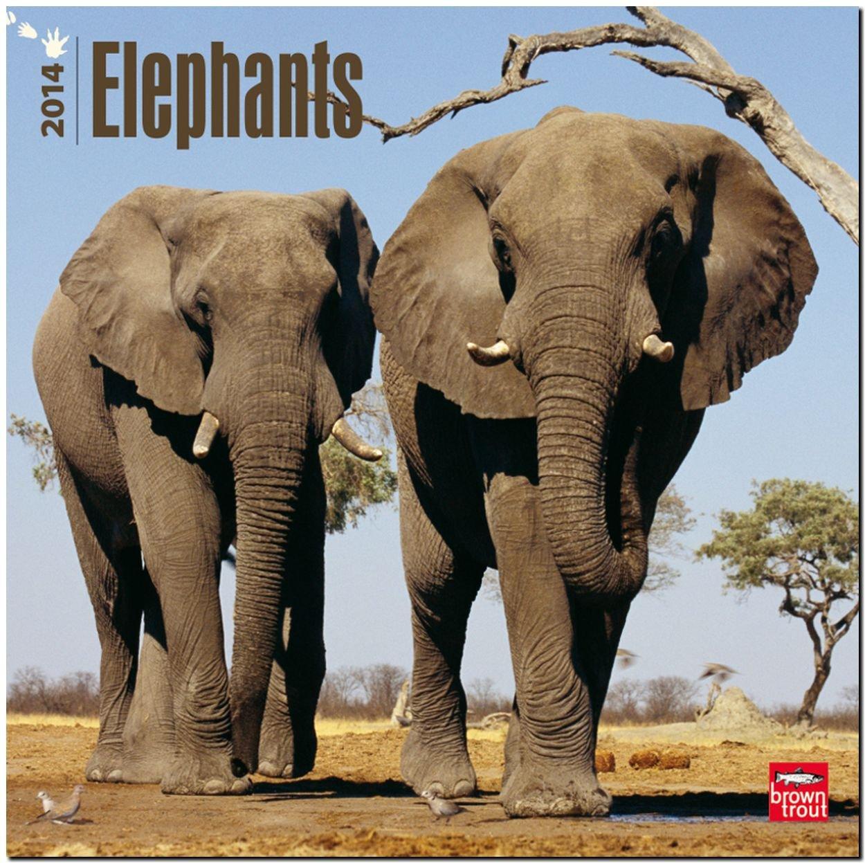 Elephants 2014 - Elefanten: Original BrownTrout-Kalender [Mehrsprachig] [Kalender]
