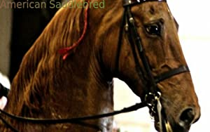 Top 20 Horse Breeds 2 from Appa-apps