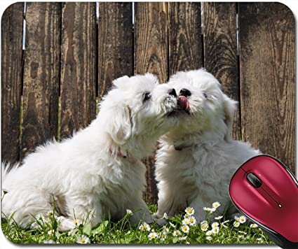 d6b613ed7f6ee Amazon.com : Liili Mousepad Big Love Two Baby Dogs Coton de Tulear Puppies  Kissing Idea for a Greeting Card 28701335 : Office Products