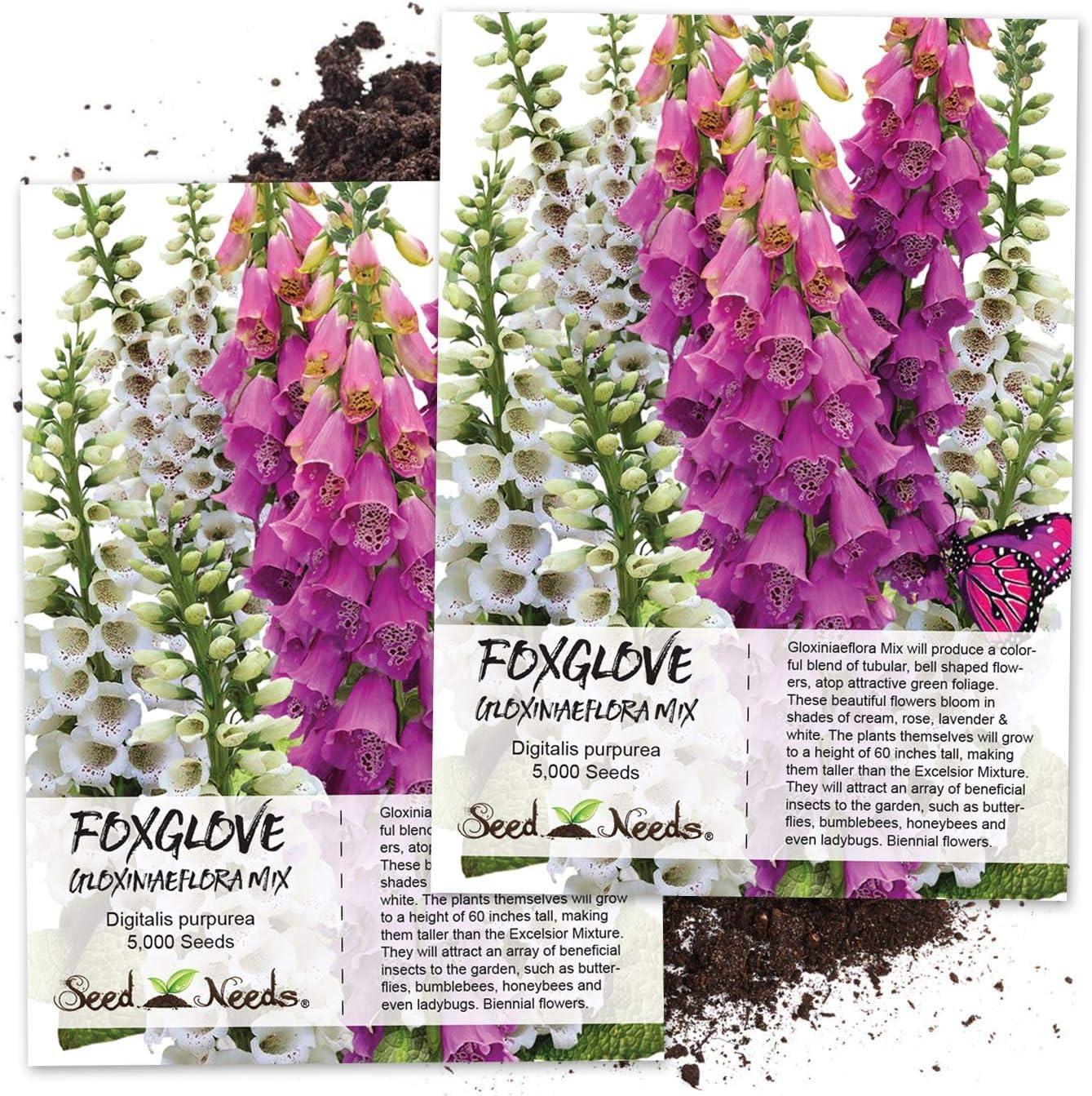 FOXGLOVE Digitalis Purpurea Hand Harvested Sustainable Wild Flower Seeds