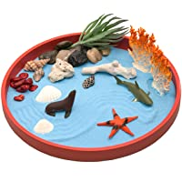 The Coral Sandbox Beach Zen Garden Desktop, for Relaxation and Meditation, Play Sand Box Toy for Kids, Boys and Girls