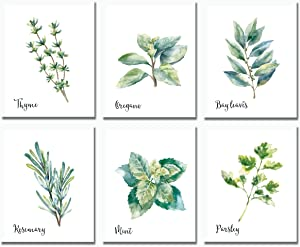 Herbs Wall Art Prints -Set of 6 (8x10)- Kitchen Home Decor Botanical Farmhouse Country Decorations Watercolor - UNFRAMED - Green Small Nature Plant