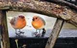 Set of two Robin Ornaments, suitable for outside. Weatherproof resin