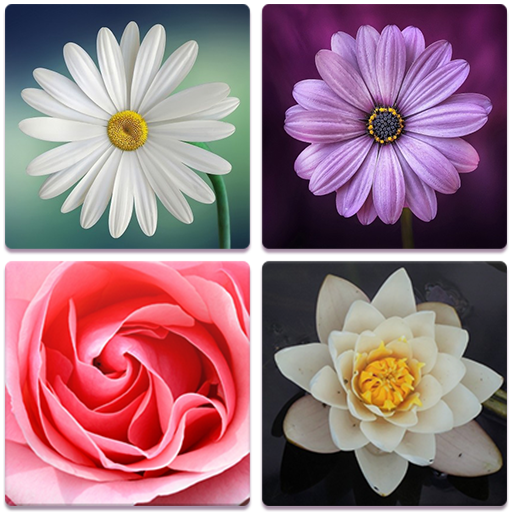 Flower Memory - Puzzle Brain Games For Adults, Kids And Seniors -