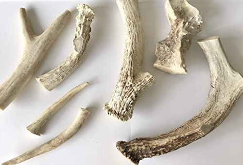 A1 Texas Bones Antler Dog Chew