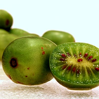 Hardy Kiwi Seeds (Actinidia arguta) 20+ Rare Cold-Tolerant Tropical Fruit Seeds in FROZEN SEED CAPSULES for The Gardener & Rare Seeds Collector - Plant Seeds Now or Save Seeds for Years : Garden & Outdoor