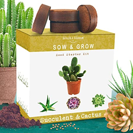 Amazon Com Nature S Blossom Succulent And Cactus Growing Kit A