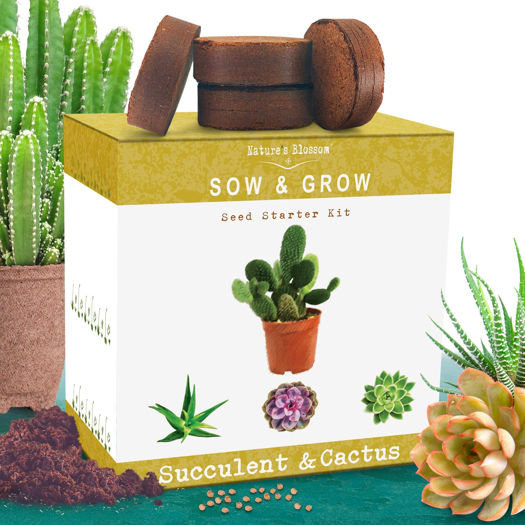 Nature's Blossom Succulent and Cactus Growing Kit. A Complete Garden Starter Set To Grow Your Own Succulents and Cacti Plants From Organic Seeds. Indoor Gardening Guide Included by Nature's Blossom