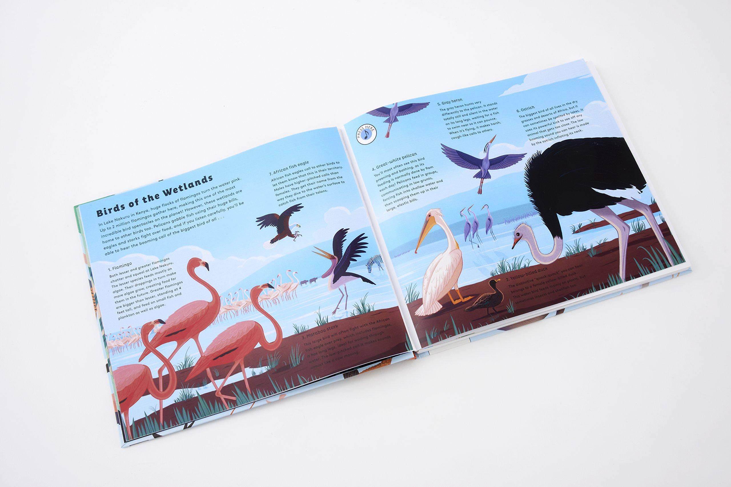 Sounds of Nature: World of Birds: 1: Amazon co uk: Robert Frank