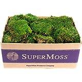 SuperMoss (21538) Mood Moss Preserved, Fresh Green, 3lbs
