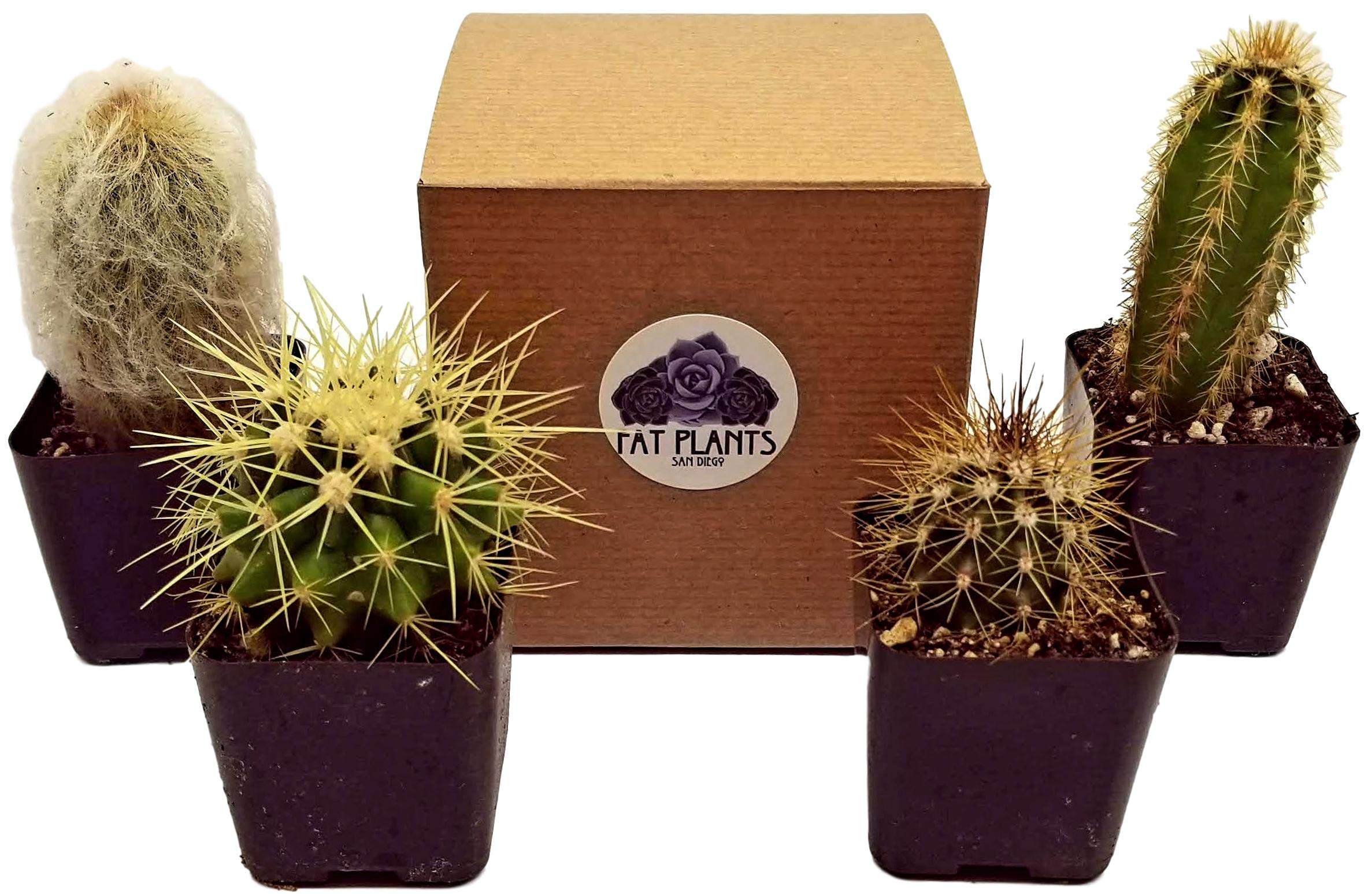 Fat Plants San Diego Mini Cactus Plants in Plastic Planters