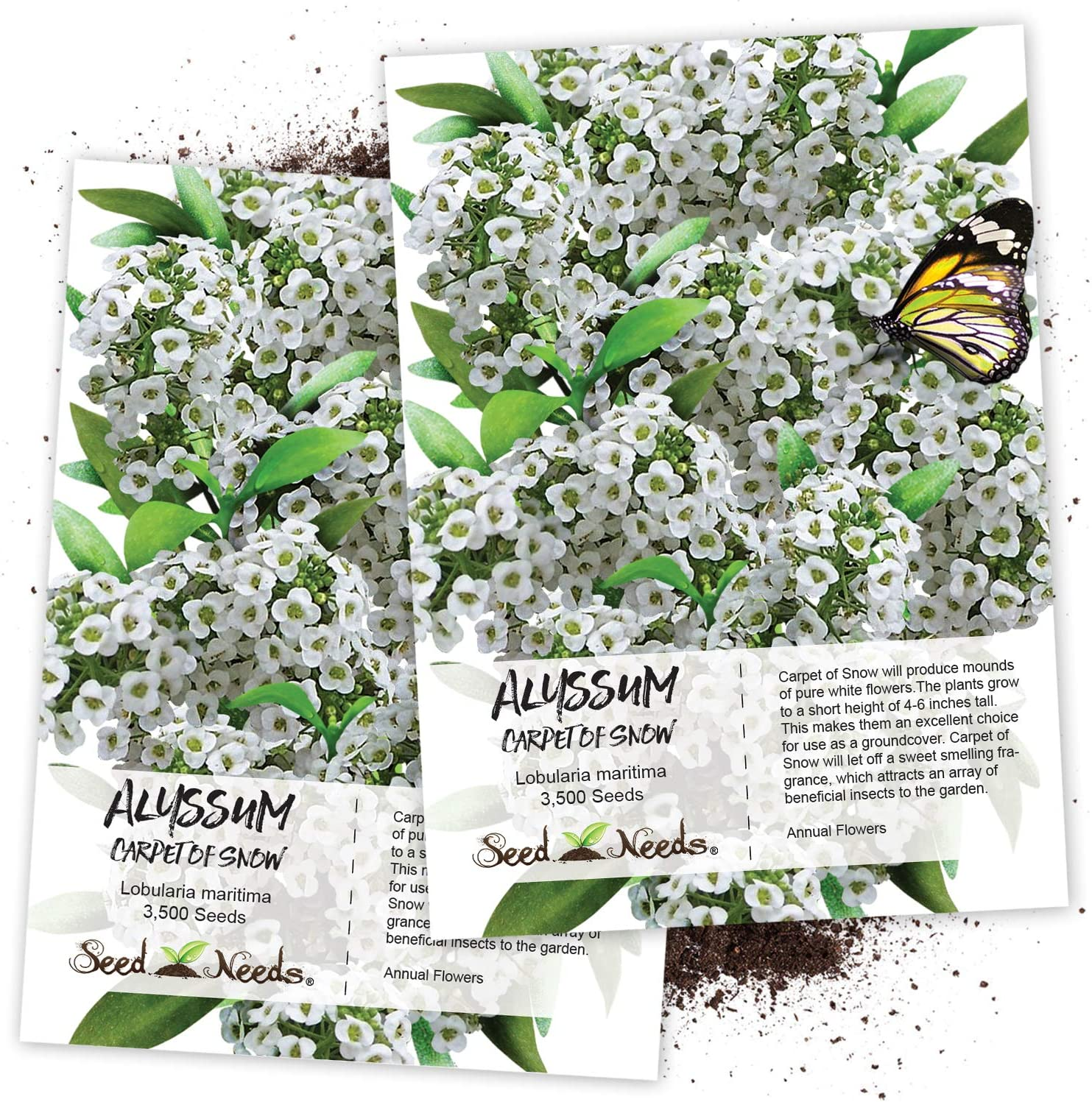 BUY ANY 2 GET 1 FREE ALYSSUM MARITIMA CARPET OF SNOW SEEDS APPROX 1000 SEEDS